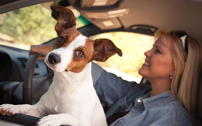 5 Tips To Follow For Safe Driving With Pets